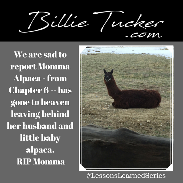 We are sad to report:  Momma Alpaca has gone to heaven